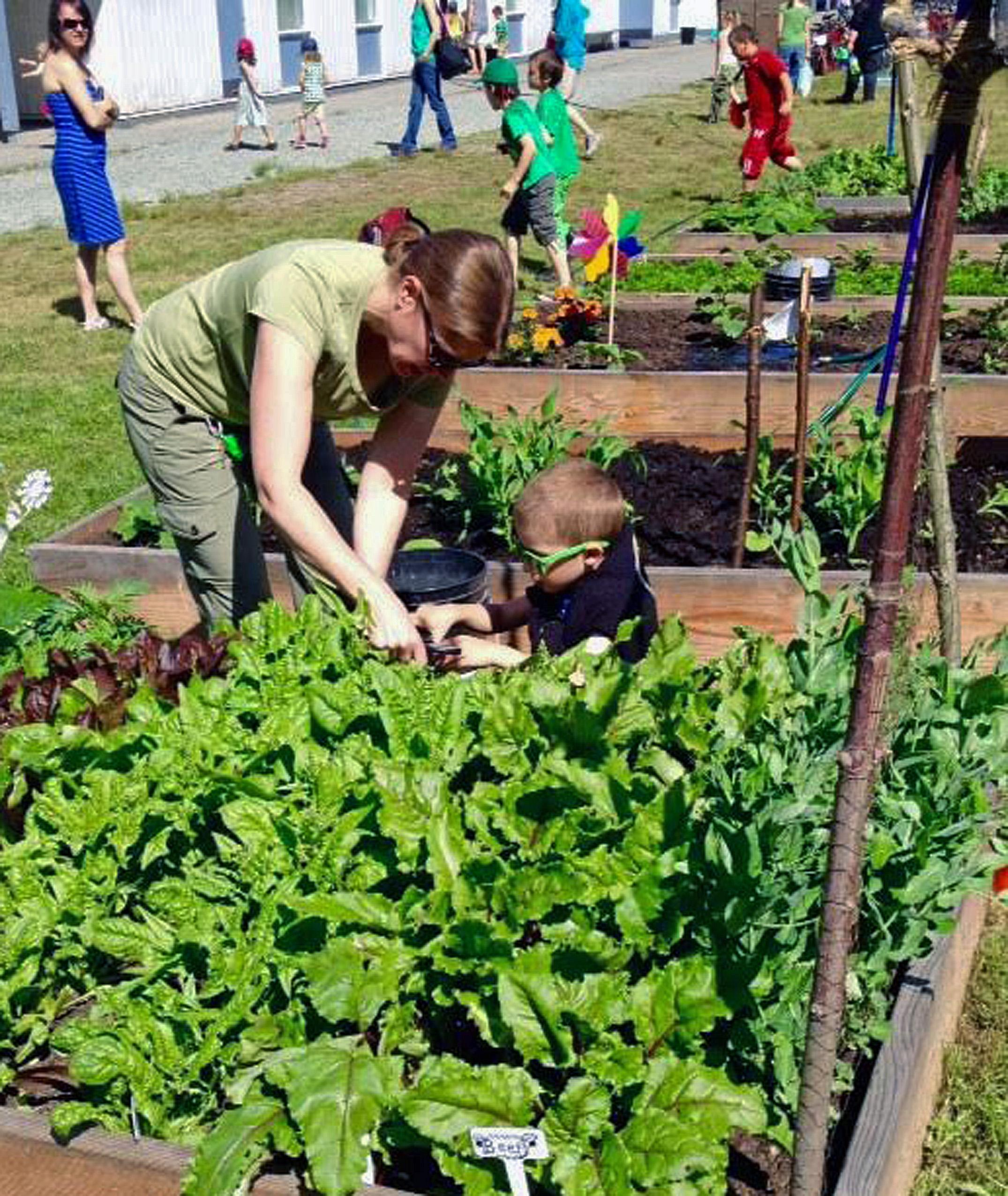 Students and staff working in the garden beds
