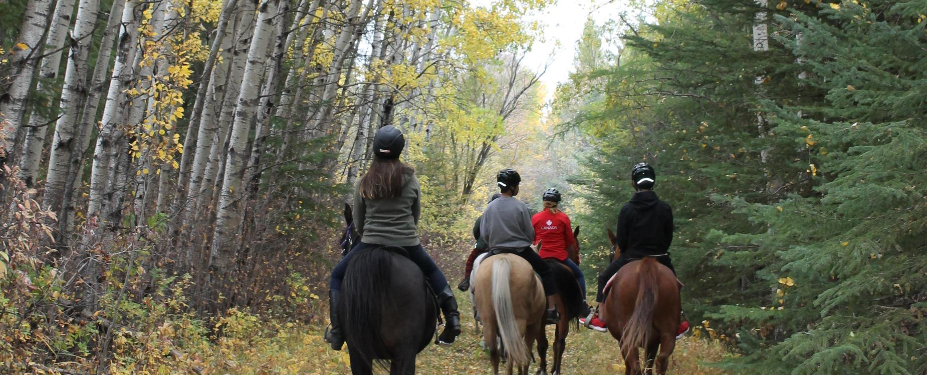 trail ride on horses