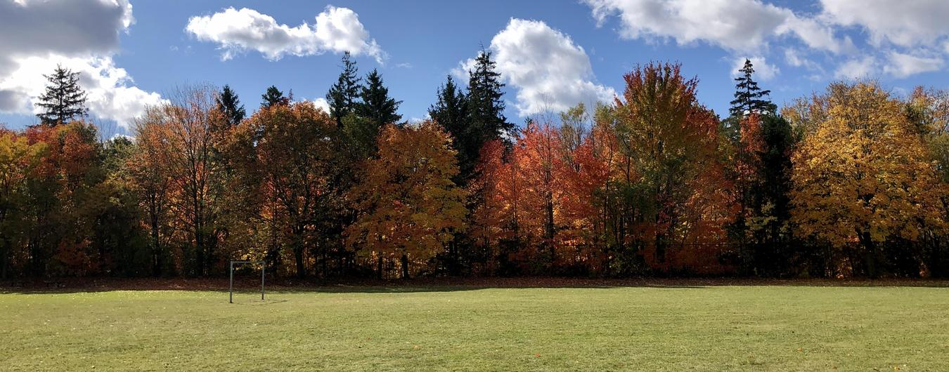 View of Avon Public School grounds in fall. Sunny blue sky with clouds, evergreen and deciduous trees, grass, and a soccer net.