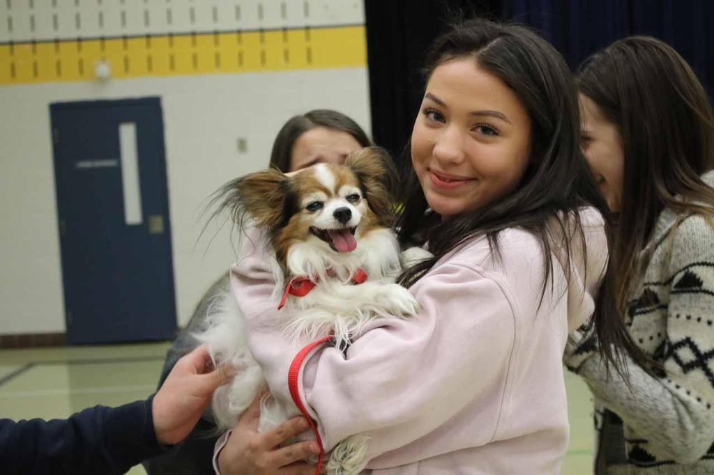 Saint John Ambulance Therapy Dogs