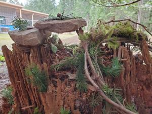 fairy stump.jpg