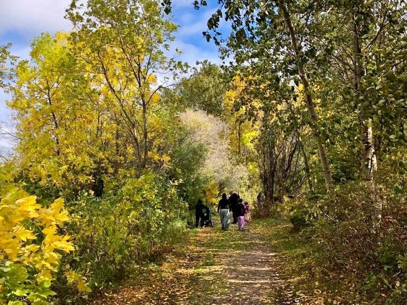 Students walking among trees.