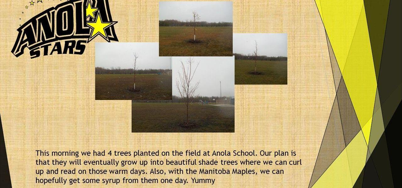 4 separate  pictures of 4 trees planted on Anola School Field.