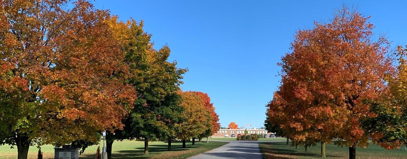Elma Township Public School Fall Maple Trees