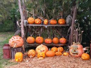 pumpkin display.jpg