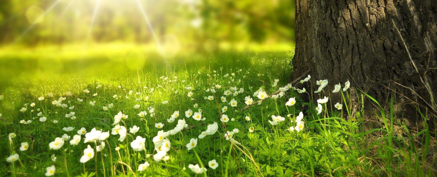meadow, flowers, tree