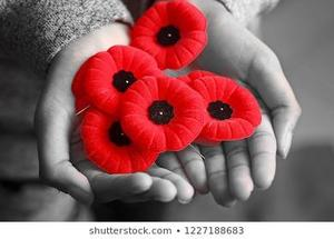 commonwealth-countries-remembrance-day-veterans-260nw-1227188683.jpg