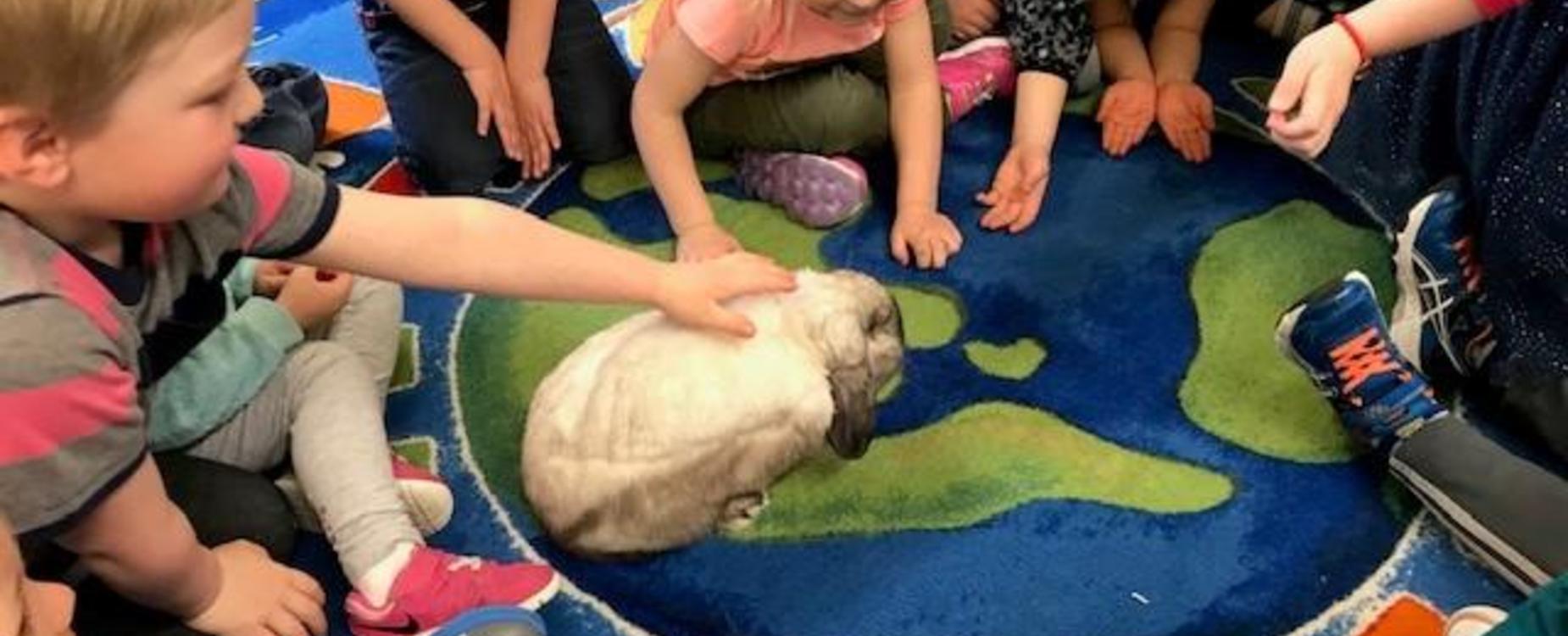 children petting rabbit