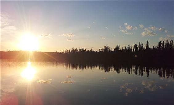 NLSD#113 landscape
