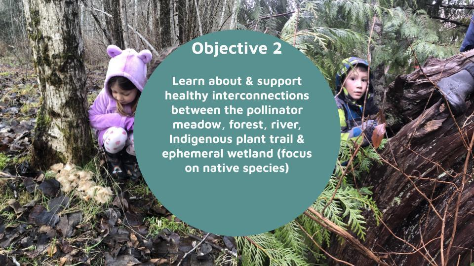 Objective 2   Learn about & support healthy interconnections between the pollinator meadow, forest, river, Indigenous plant trail & ephemeral wetland (focus on native species