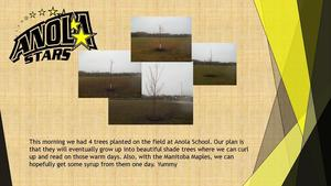 4 separate trees planted on the field at Anola School