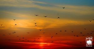 Sunset with birds flying