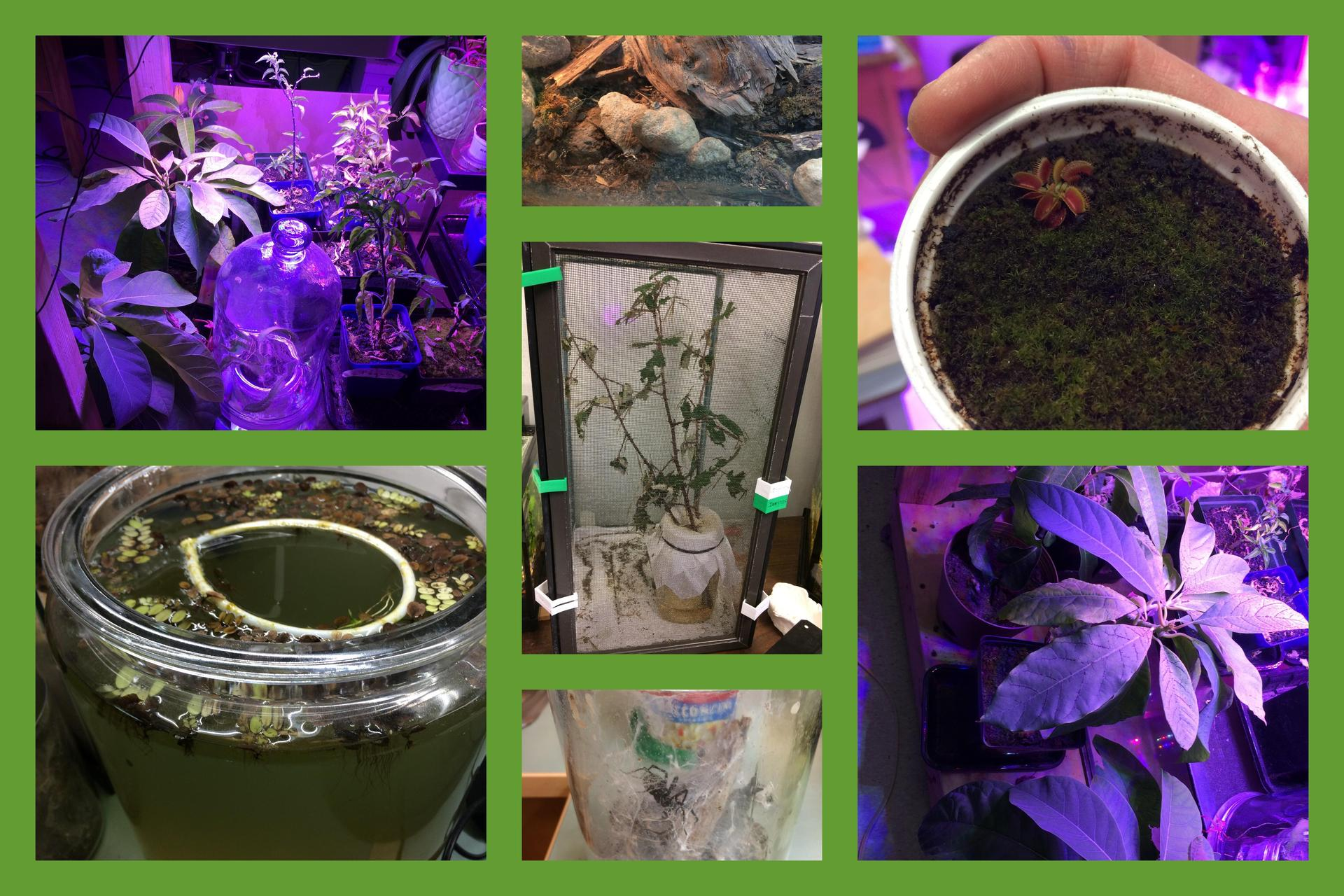 plants and pets collage