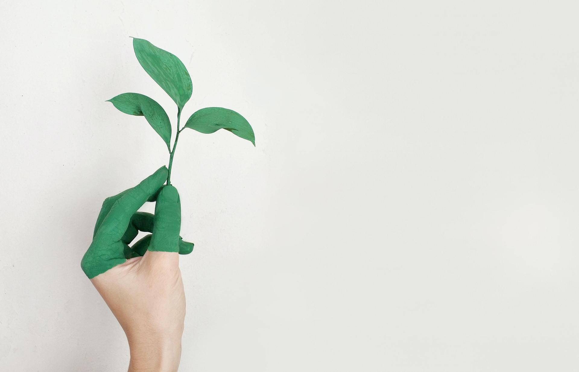 plant and hand