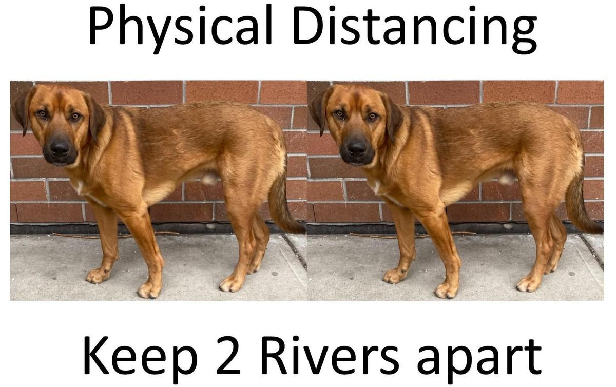 physical distancing dog poster